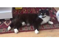 Missing Cat from Briar Brae, Brightons, Falkirk