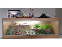 Large vivarium full set up with accessories included