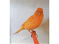 Various Canaries