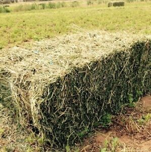 Square bale of Hay!