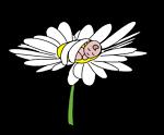 Wee Daisy