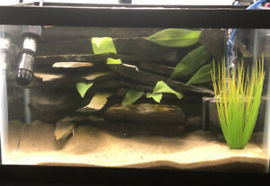 5 Gallon Aquarium with heater & filter