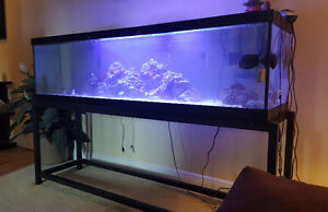 110 gallon tank and stand