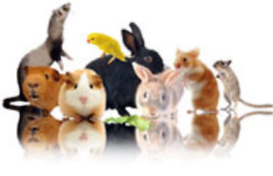 Offering pocket pet, bird & reptile boarding
