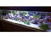 6ft fish tank full set up