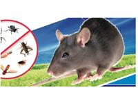 Mice Bedbugs Rat Cockroaches Ants pest control in london 100% Same day extermination