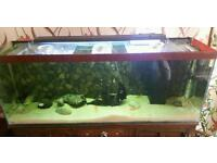 Large tropical fish tank