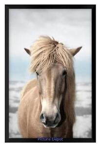 Wall Art Sale - Big Brown Horse(PA33)