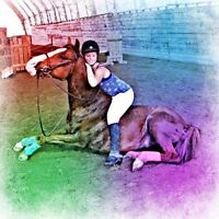 7 y/o All around Quarter Horse Gelding- Free Off Property Lease