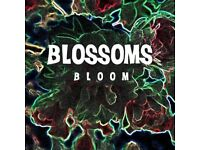 Blossoms 'Bloom' 3-Track EP cd (Mint Condition) WANTED