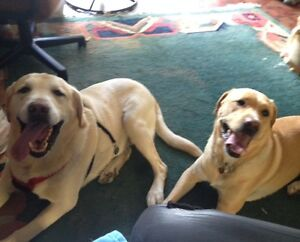 in home Dog Sitting & Boarding Services