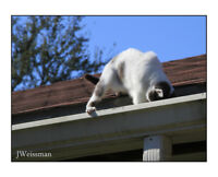 ROOF REPAIRS ALL DAY MONDAY FIX TODAY SHINGLES SHAKES TILE