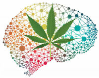 Healthy volunteers for a cannabis/psychosis research study