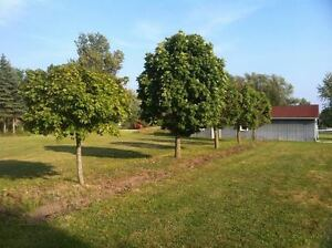3.6 ACRES WITH DEEDED LAKE ACCESS IN BAINSVILLE Cornwall Ontario image 8