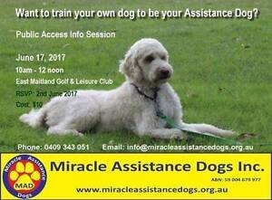 INTRODUCTION TO ASSISTANCE DOGS East Maitland Maitland Area Preview
