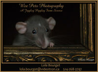 Wee Pets Photography - A Jiggley Piggley Farm Service