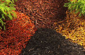 Natural and Coloured Cedar Mulch - $35/Yard