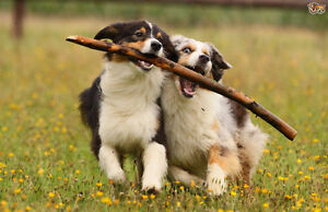 Affordable and Reliable Dog Walking & Pet Sitting Services Windsor Region Ontario image 8