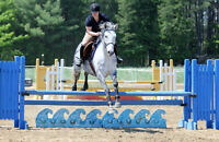 Riding Lessons Adult Lessons Saturday Horse Club For Kids