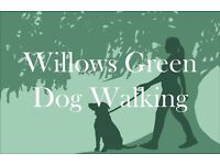 Professional dog walker 🐾🐾 Plymouth/Saltash areas covered.
