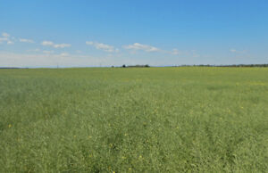 1 Parcel of Farmland-Sundre, AB-Unreserved Public Auction