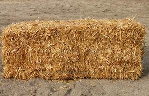 Looking for a  small bale of straw!