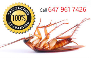 OAKVILLE REGION- WE KNOW HOW TO GET RID OF PESTS 647 961 7426