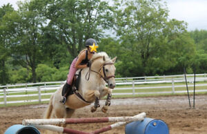 JUSTICE - QH/APPY FOR SALE