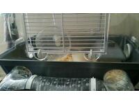 Russian Dwarf hamster with cage and assesories