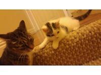 kittens for sale (one boy left)