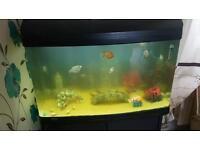 Aqua one fish tank 3ft