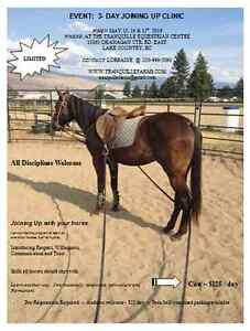 *Joining Up* at Tranquille Equestrian & Learning Centre