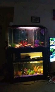 Small cichlids for sale