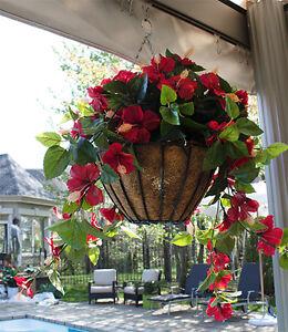 Jardinière suspendue, Fleur, Hanging basket, Flowerpot
