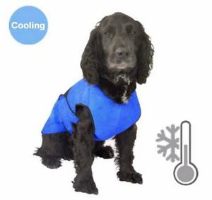 Dog Cool Cooling Coats - Prevent Heat Stress this Summer Bundall Gold Coast City Preview