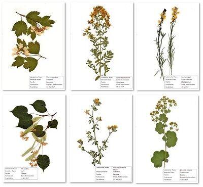 Herbarium 30 Pflanzen. Low Price! Frei wählbar. Aus J. 2018. 140 Arten