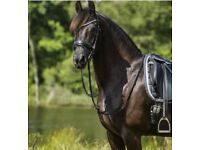 Anatomical Bling Bridles and doubles - Full & XFull - Stock Clearance