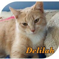 Deli is looking for a forever home.
