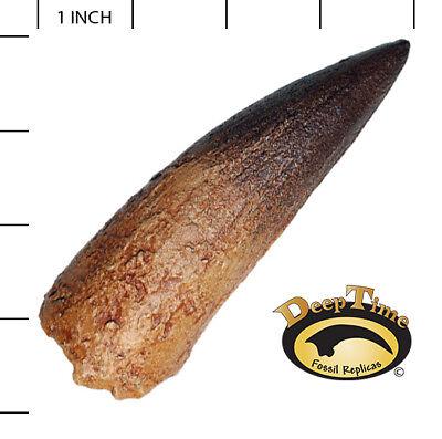Spinosaurus LG Tooth - Cast Replica, Dinosaur Tooth (SN24)