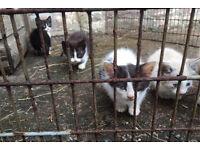 4 farm kittens for re-himing