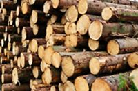 Firewood (Softwood) For Sale – Elmsdale