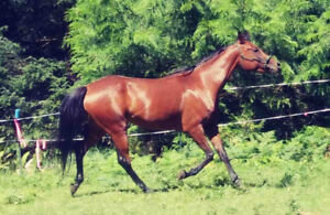 2 horses, prices reduced!