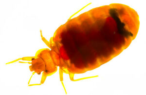 BED BUG,ROACHES,MICE CONTROL......LOW PRICE
