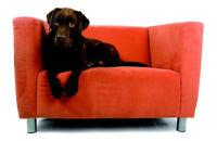 Nettoyage Urgent de tapis et meubles