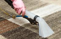 Regina Carpet Shampoo Cleaning