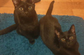 Kittens (5 months old)