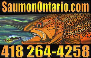 Saumon Lac Ontario .com