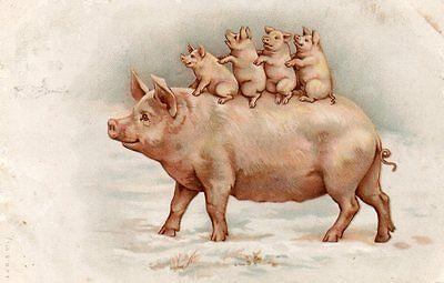 VINTAGE MISCH GENRE series 17 postcard of PIG & PIGLETS snow Christmas  1905