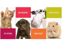 Pet Care For Less - Dog walking and Pet sitting service in Daventry
