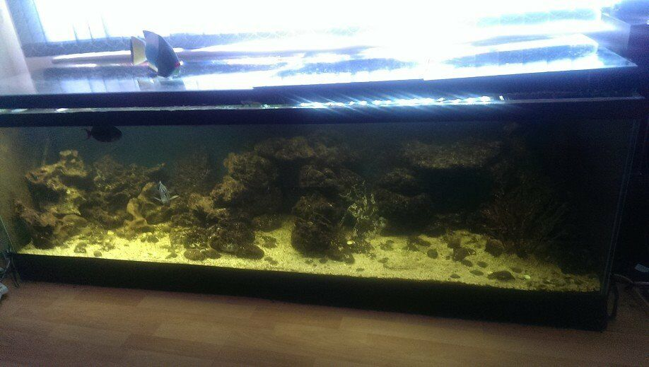 3ft fish tank for sale essex